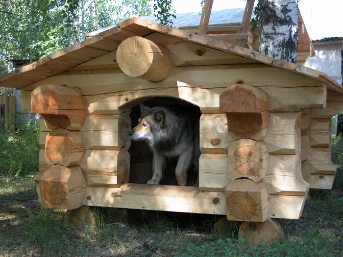 Первые шаги к будущей будке для собаки