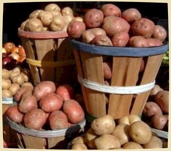 сорта картофеля для …