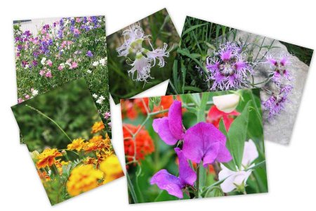 ароматные растения вашего сада