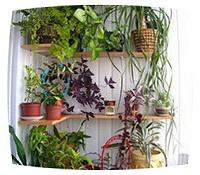 украшаем балкон цветущими растениями