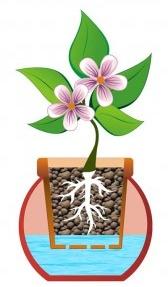 home-hydroponics-1