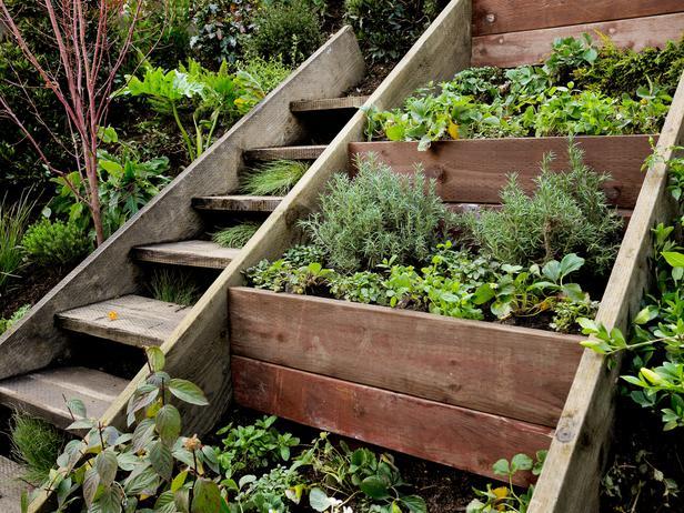 ящик для выращивания пряностей на даче