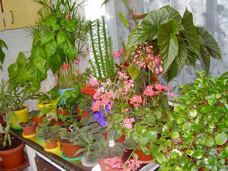 делаем зимний сад на своем балконе