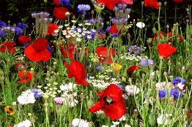 цветы ленивой клумбы