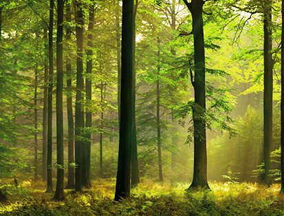 Леса под угрозой