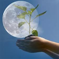 Лунный календарь садовода-огородника на 2013 год
