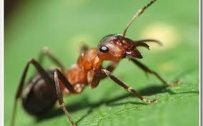 муравей на даче