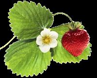 выращиваем фрукты и …