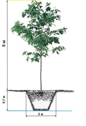 Нормы полива растений
