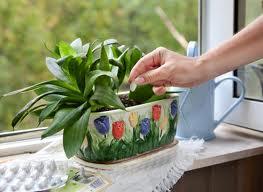 удобряем домашние цветы